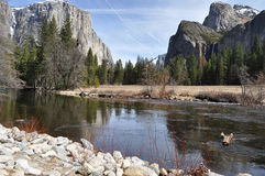 Yosemite NP Immagine Stock Libera da Diritti