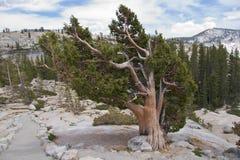 Yosemite NP Fotos de archivo