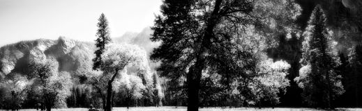 Yosemite Pano in Infrared. An infrared panoramic shot taken in Yosemite Valley. Image has a grainy, dreamlike feel to it because of the infrared processing Royalty Free Stock Image