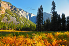 The Yosemite park Royalty Free Stock Photo