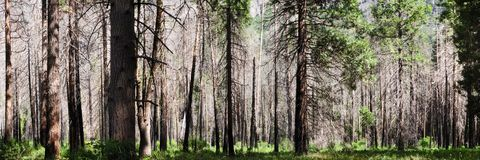 Yosemite Park forest Royalty Free Stock Photo
