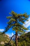 Yosemite park narodowy Obrazy Royalty Free