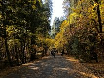 Yosemite Path in Fall Stock Image