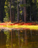 Yosemite Pond Royalty Free Stock Images