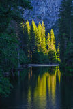 Yosemite Reflection. The forest reflects in a waterway in Yosemite Valley, Yosemite National Park Royalty Free Stock Photography