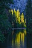 Yosemite reflexion Royaltyfri Fotografi