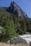 Yosemite River and flowers Stock Photo