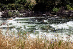 Yosemite River and flowers Royalty Free Stock Photos