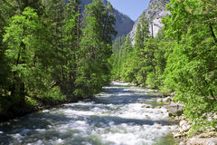 Yosemite River In summer On A Clear Day Stock Image