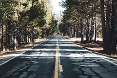Yosemite Road lined with Trees stock photo