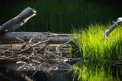 Yosemite See-Spiegel lizenzfreie stockfotografie
