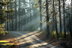 Yosemite solljus Arkivbild