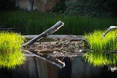 Yosemite-Teich-Reflexion stockfotos