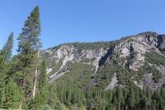 Yosemite ~ 2013 ~ träd & berget Arkivfoton
