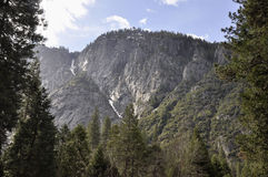 Yosemite trees. Yosemite's diverse landscape shelters 37 species of native trees and hundreds of species of native wildflowers, many of which can be found Royalty Free Stock Image