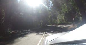 Yosemite väg under sommaren från en bil stock video