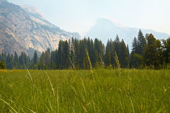 Yosemite Valley. Meadows, Yosemite National Park, California, USA Royalty Free Stock Photo
