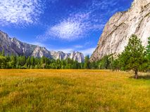 Yosemite Valley Meadow. Summer meadow in the Yosemite Valley Royalty Free Stock Images