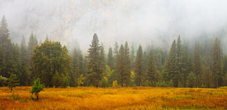 Yosemite Valley Scene Stock Images