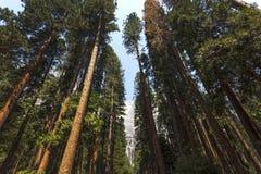 Yosemite valley, Yosemite national park, California, usa stock photo