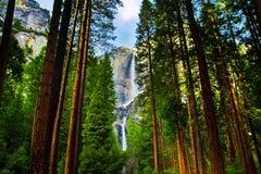 Yosemite vattenfall bak sequoior i den Yosemite nationalparken, Kalifornien royaltyfria foton