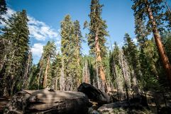 Yosemite view into forest Stock Image