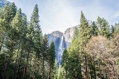 Yosemite Waterfalls behind Sequoias in Yosemite National Park, California stock images