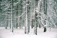 Yosemite Winter Royalty Free Stock Photos