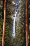 Yosemitedalingen en bomen Royalty-vrije Stock Afbeelding
