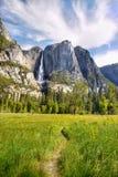 Yosemitewaterval, het Nationale Park van Yosemite Stock Foto's
