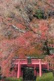 Yoshimine-dera świątynia w jesieni Obrazy Royalty Free