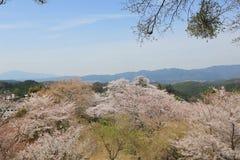 Yoshino över 1000 Arkivfoto