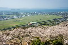 Flowers and city area. Yoshino cherry blossoms in front of Izumi city area Stock Images