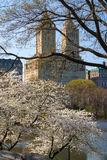 Yoshino Cherry Trees Blooming i våren, Central Park, New York Royaltyfria Bilder