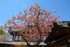 Yoshino, Japan royalty-vrije stock afbeelding