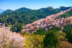 Yoshinoyama, Japan in Spring Royalty Free Stock Photo
