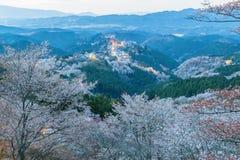 Yoshinoyama sakura cherry blossom Stock Photography
