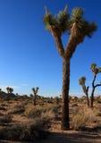 Yoshua drzewo w pięknym niebieskim niebie Zdjęcia Royalty Free
