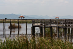 yot för swamp för roi sam för khaolotusblommanationalpark Arkivbild