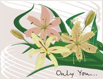 Only You. Flowers on the simpe background Royalty Free Stock Image