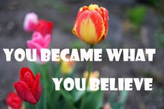 Free You Became What You Believe  Wise Phrases Stock Images - 182936734