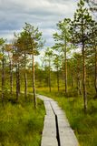 Beautiful swamp area in scandinavia. stock photography