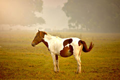 You can take a Horse out of the wild, but you can`t take the wild out of the Horse! Royalty Free Stock Photography