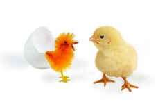 Are you fake?. One real and one fake easter chick Royalty Free Stock Photo