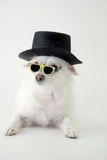 You have to be kidding!. Chastising dog peers over spectacles Royalty Free Stock Images
