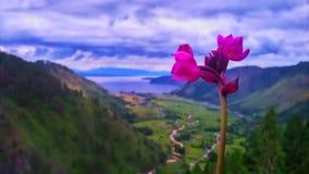 Flower ofer the mountain at toba lake Stock Photos