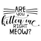 Are you kitten me right meow. Funny vector typography for t-shirt, mug, picture or etc. Hand drawn   lettering Stock Photography