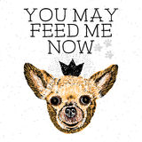 You may feed me now. Sign with cute smiling but hungry dog. Motivational lettering on texture background. Inscriptions for dog lovers. Inspirational typographic Stock Photography