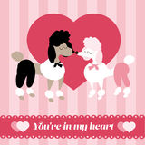 You are in my heart. Valentines Day card, decorated dogs - poodles Royalty Free Stock Image