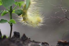 Caterpillar, Macro Photo stock photos